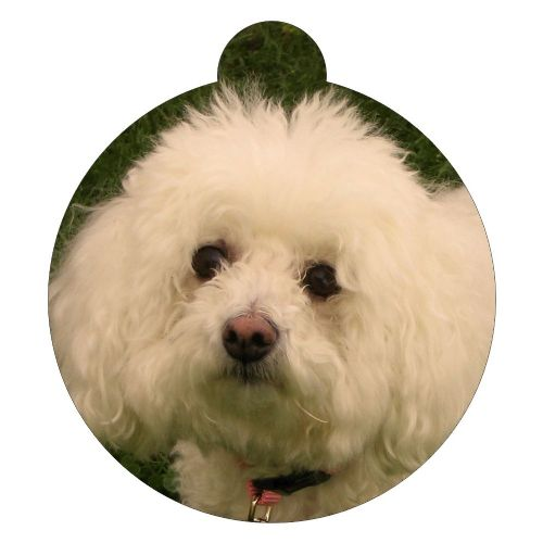 Bichon Frise  Picture ID tag